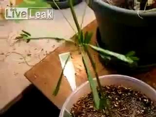 Растение реагирует на прикосновение